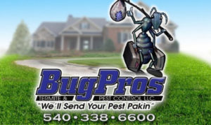 bugpros termite and pest control, bugpros, bug pros, bug pros pest control, pest control, ants, termites, spiders, mice, rats, bed bugs, stink bugs, fleas, ticks, beetles, roaches, bees, centipedes, insects, wood destroying insects, hornets, hornets nest, bugs, bug, pest, pest control, snakes, snake removal, general pest control, rodent control, exterminator, one time service, carpenter ant, earwigs, commercial pest control, residential, flying insects, termite inspection, WDI reports, real estate reports, termidor, pest control treatment, nova, northern Virginia, Hillsboro, Round Hill, bluemont, Waterford, lucketts, Lovettsville, Purcellville,Hamilton, Leesburg, Ashburn, Sterling, Brambleton, Herndon, Reston, Chantilly, Mclean, Vienna, Loudoun county, Fairfax county, free inspections, free estimates, local, pest control problem, quarterly service, liquid treatment, termite bait system, certified, certified technicians, licensed technician, same day service,